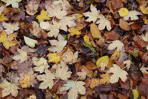 Herfst von Vercruysse Paulien