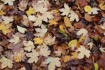 Herfst van Vercruysse Paulien