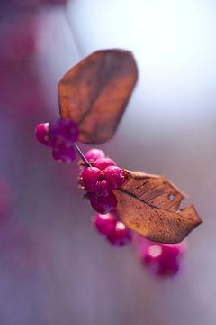 ein Traum in Pink von Steffi Hommel