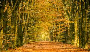 Pad in een herfst bos
