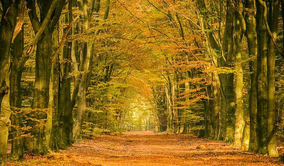 Pad in een herfst bos van Sjoerd van der Wal