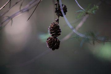 Herbst von Wolbert Erich