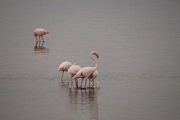Flamingo's in de zee van Erna Haarsma-Hoogterp