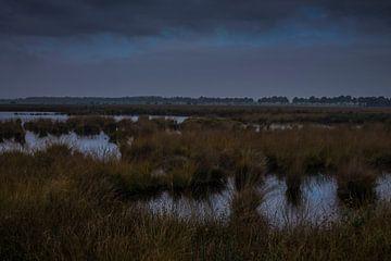 Hollands landschap von Jacco van der Veen