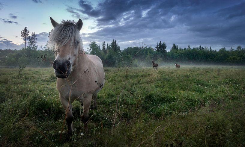 Horses in the mist von Bart Sallé