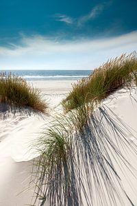 Noordzee Schoonheid Sylt van