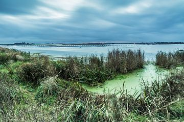 Het Dannemeer is een natuurgebied in Groningen sur Arline Photography