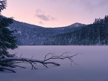 Sonnenuntergang am gefrorenen Arbersee 1 von Max Schiefele