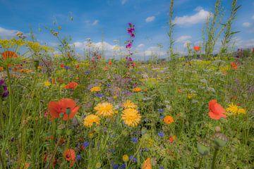 Kleurrijke bloemenweide van Moetwil en van Dijk - Fotografie