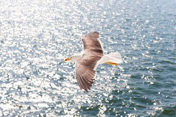 Zee meeuw in vlucht op het water van