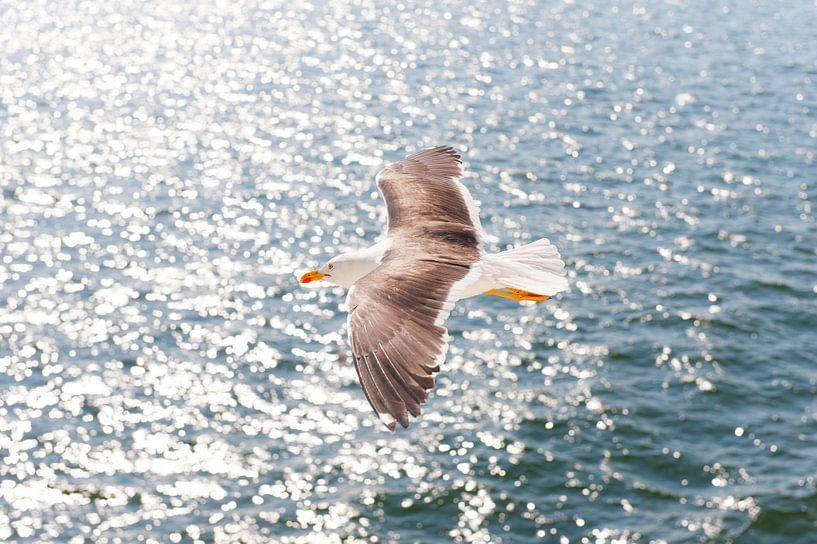 Zee meeuw in vlucht op het water van Brian Morgan