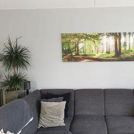 Kundenfoto: Idyllischer Wald bei Sonnenaufgang von Günter Albers, auf leinwand
