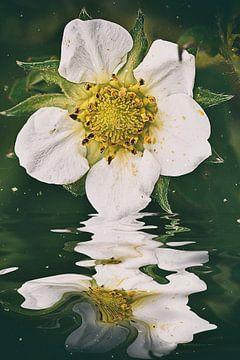 Bloemenwater - Aardbeiensmoothie van Christine Nöhmeier