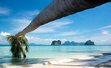 Hängende Palme über tropischem Strand von Pieter Tel