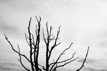 Bladerloos boom van Jan Brons