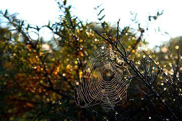 klitzekleine Spinne von Eva Overbeeke