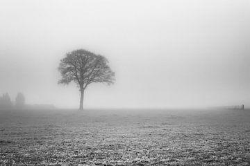 Koude mistige ochtend van Paul Lagendijk