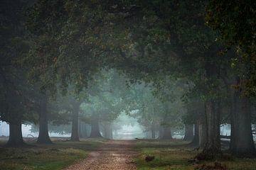 Rustikaler Waldweg von Jeroen Lagerwerf