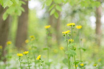 Frühling unter den Bäumen von Birgitte Bergman