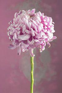Rose bloem van Clazien Boot