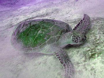 Groen Schildpadje. van Silvia Weenink