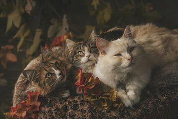 Autumn cats van