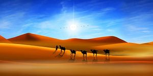 Kamelen in de woestijn van