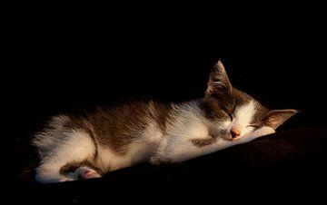 slapende kitten von Bianca Muntinga