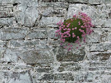 Mauerblümchen von Andreas Müller