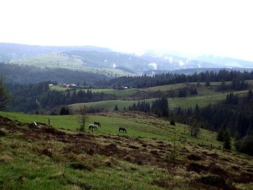 Paarden in de heuvels von Wilma Rigo