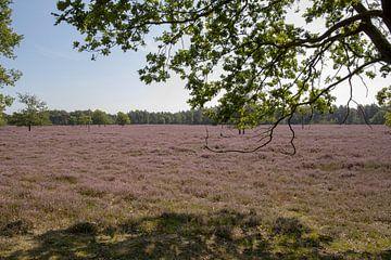 Heide in de bloei van Tanja van Beuningen