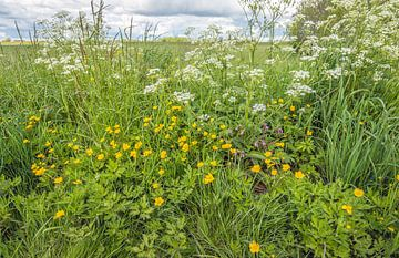 Plantes sauvages en fleurs au bord d'un champ néerlandais sur Ruud Morijn