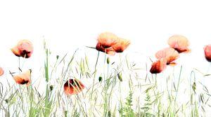 klaprozen in het veld