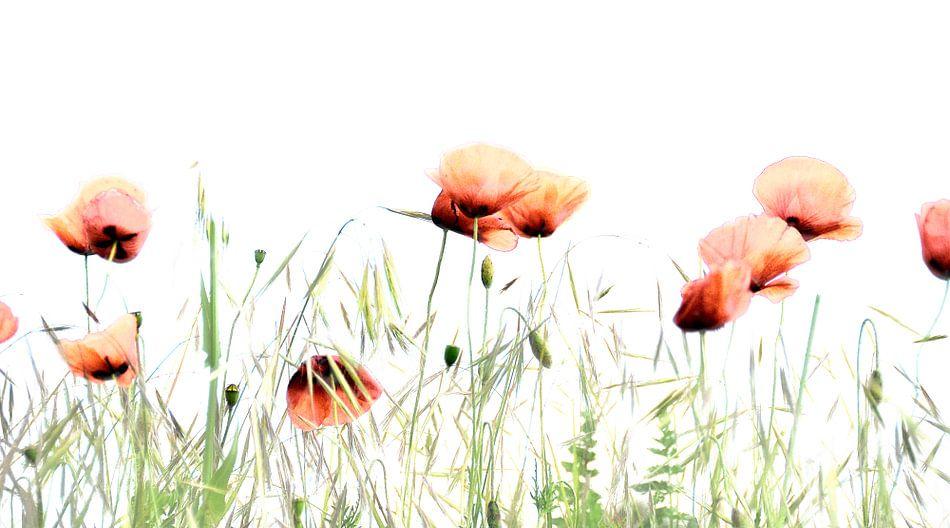 klaprozen in het veld van Anouschka Hendriks