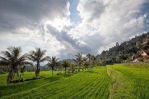 zonsondergang op munduk rijstvelden en berg in Bali