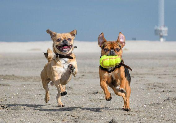 Spelende hondjes op het strand van Danny de Jong