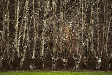 Versteckte Wälder Nr. 2 von Lars van de Goor