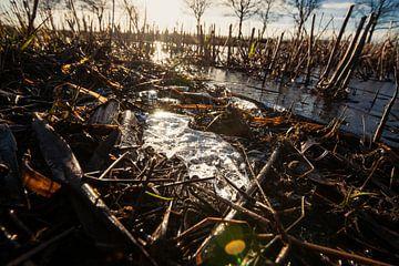 Erstaunliche niedrige Winkelsicht oder Reedanlage schnitten auf Reisfeld mit Sonne von Fotografiecor .nl