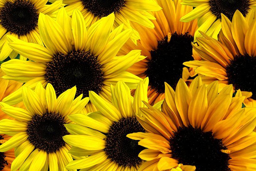 Sonnenblumen Muster von Patricia Piotrak