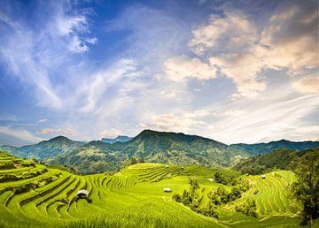 Reisfelder Vietnam von Jeroen Mikkers