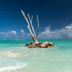 Punta Cana, Dominicaanse Republiek van Peter Schickert