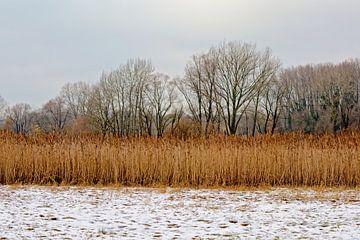Winter in de meersen van de Bourgoyen van