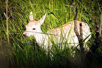 Jong hertje in hoog gras van Marcel Alsemgeest