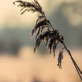 Winter Cold van Johnny van der Leelie