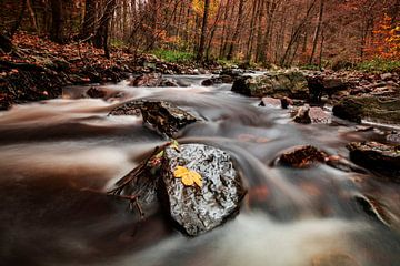 La rivière Hoëgne dans les Ardennes sur AGAMI Photo Agency