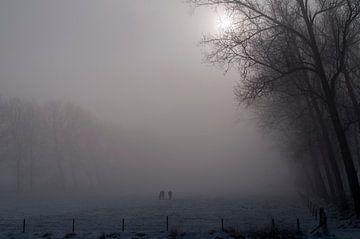 Paarden in the mist.