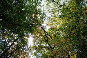 Green sky van Chris Smid