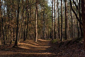 Bospad in het Otterlose Bos. van Rick van der Poorten