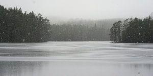 Sneeuw in zwart wit
