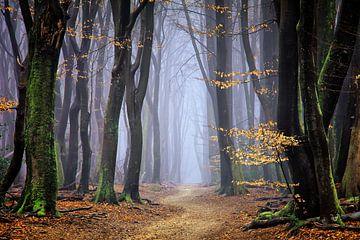 Mystical Forest von Rigo Meens